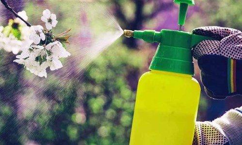 Що таке інсектициди?