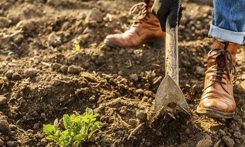 Как подготовить садовую землю к зиме?